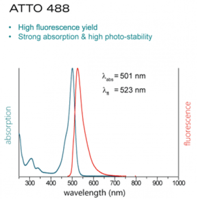 ATTO488-Actin for TIRFM (alpha-Actin, skeletal muscle rabbit) - 5x100µg