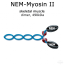 NEM-Myosin II (rabbit, m. psoas) - 1x200 µg
