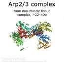 Arp 2/3 protein complex - 1.0 mg